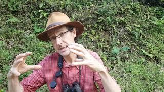 Entrevista com David Watson, especialista mundial em ervas-de-passarinho
