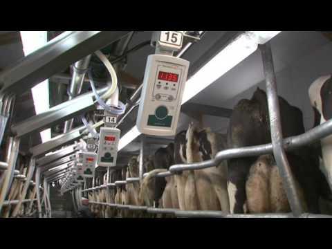 GEA Farm Technologies - Milking Parlor - SwingOver - EN