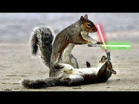 Image result for squirrels with lightsabers