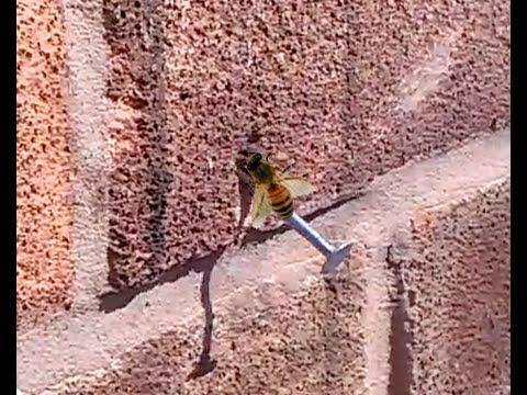 Duvardaki Çiviyi Çıkaran Arı