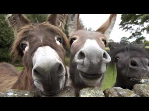 Смешные картинки Животные и дети, приколы фото про