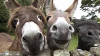 Эти смешные животные...(These funny animals ...)Смотреть!