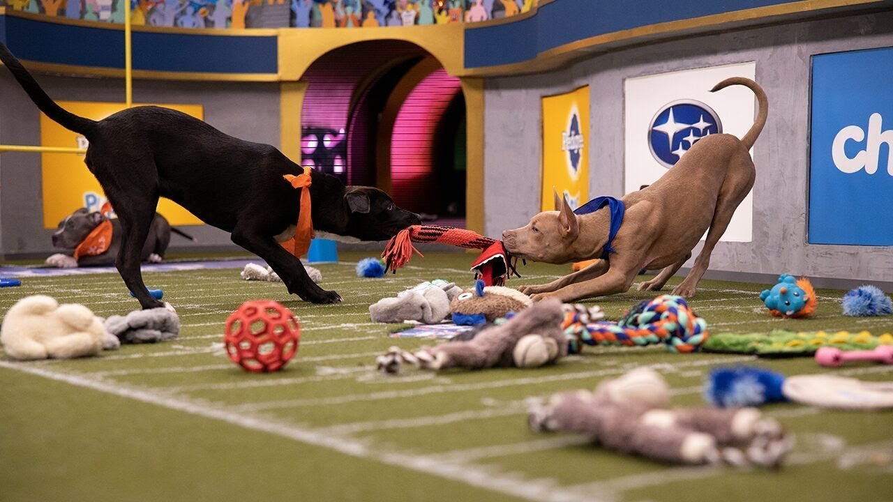 Puppy Bowl 2020: Here's everything you need to know - CNN
