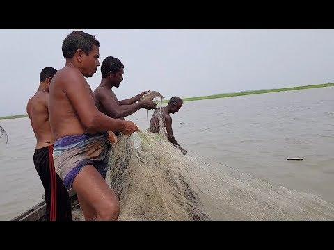 Fishing/ilish fishing/live ilish/catch ilish fish/padma river fishing /পদ্মা নদীর ইলিশ মাছ কি ভাবে