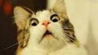 Кошачьи приколы: подборка#2