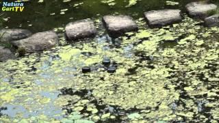 Entstehung und Vermeidung von Algen im Gartenteich