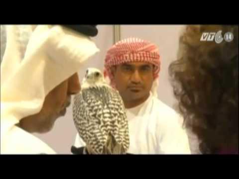 VTC14_Cuộc thi sắc đẹp chim ưng thế giới ở UAE