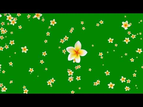 Flower Green Background Video Effects HD thumbnail