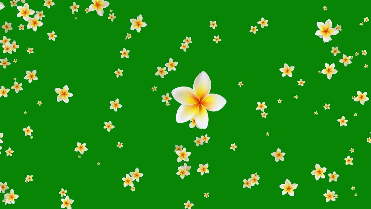 flower green background video effects hd