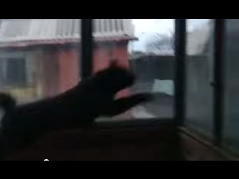 Cat Jumps Through Glass Window