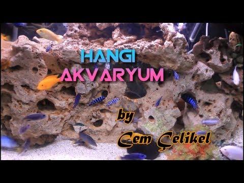 YENİ BAŞLAYANLAR iÇiN AKVARYUM NASıL OLMALı(Japon Balığı Akvaryumu Nasıl Olmalı,Melek Balığı)