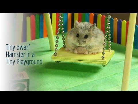 Tiny Dwarf Hamster in a Tiny Playground