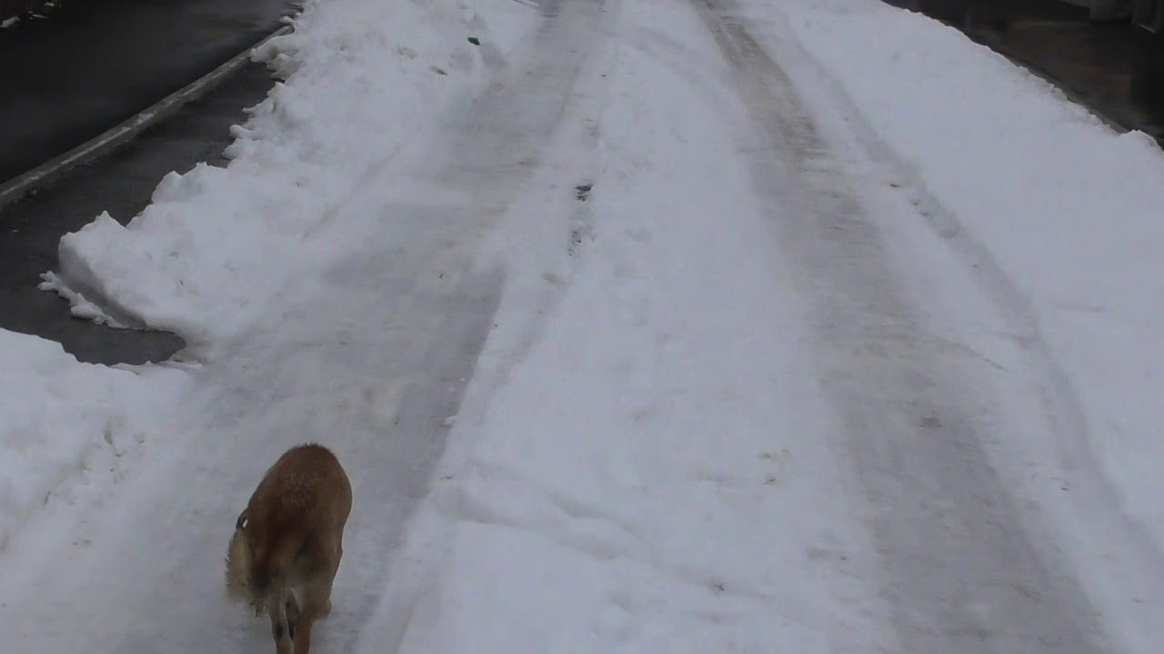 Străzi necurățate în Turda Nouă, cu gheață! (24.01.2019)