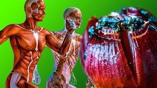 Что будет с Твоим Организмом если Есть ПЕЧЁНЫЙ ЛУК  натОщак ?!