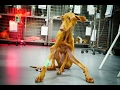 DOG FOUND ABUSED, BONES TWISTED,  BRAIN DAMAGE AND UNABLE TO STAND ! SHARE