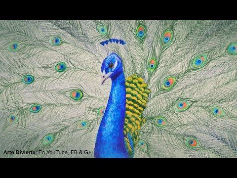 Cómo Dibujar Un Pavo Real Con Lápices De Colores Arte Divierte