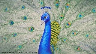 Cómo dibujar un pavo real con lápices de colores - Arte Divierte.