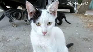 Ко́шка, или дома́шняя ко́шка - домашнее животное, одно из наиболее популярных животных-компаньонов