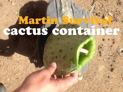 Prickly Pear Cactus Container