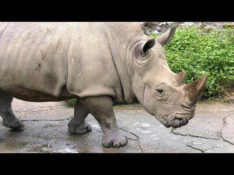 Taiwan Taipei Zoo  動物園 4K