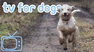 Walk My Dog TV - Cure Boredom and Entertain Your Dog! (NEW)