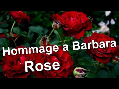 Hommage a Barbara Rose