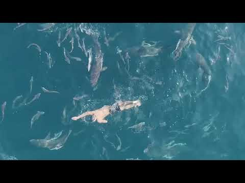 Pablo Fernandez Swimming with Sharks in South Africa (Genera