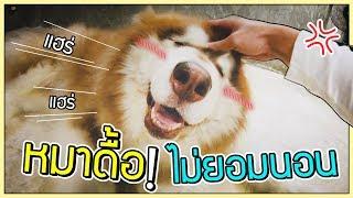 โคตรดื้อ!! หมายักษ์ไม่ยอมนอน หมาน้อยก็เช่นกัน!   ก็ผมมีลูกเป็นหมา EP.59