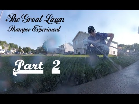 The Great Lawn Shampoo Experiment - Part 2