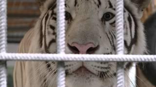 Животные Сафари-парка