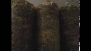 вешенка. легкий способ выращивания гриба на шелухе семечки
