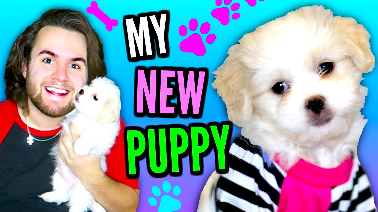 I Got A Puppy Meet Timale Timato The Dog Tag Youtube