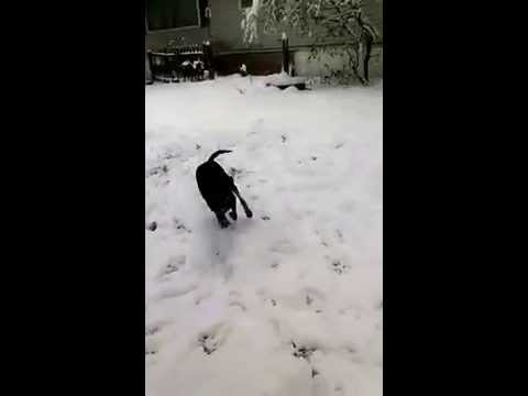 Inky's First Snow