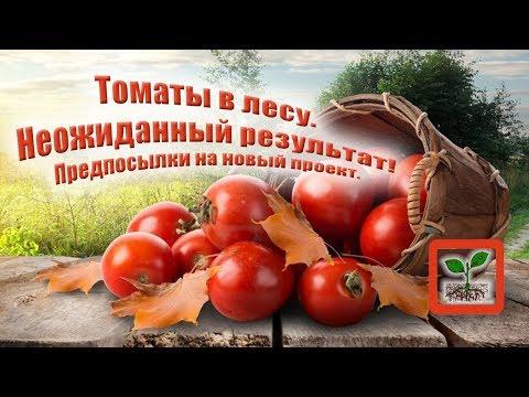 - сад, огород, дача, приусадебное хозяйство