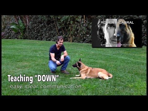 The DOWN Command - Robert Cabral Dog Training #15