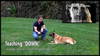 The DOWN Command  Robert Cabral Dog Training #15