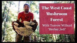 Finding the Fungal Forests | Medicinal Mushroom Mysteries | Harmonic Arts
