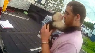 Monkey escapes arrest, owner is not so lucky