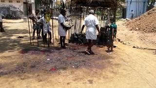 TamilNadu kongu family  kulatheivam kovil @muthur