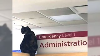 Beloved Victoria hospital cat 'Georgie' finds a new home