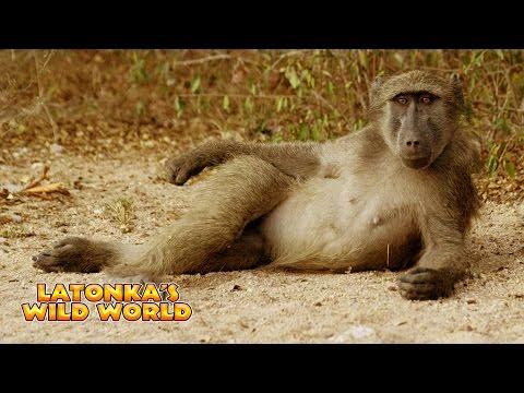 LaTonka's Wild World - Rotten Fruit Makes Animals Go Crazy