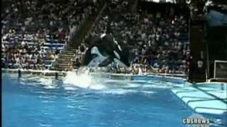 Whale Kills Trainer at Sea World