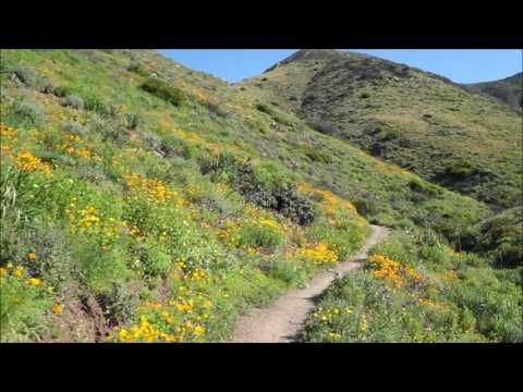 Wildflowers in Full Bloom at La Jolla Canyon and Ray Miller Trail in Pt. Mugu State Park