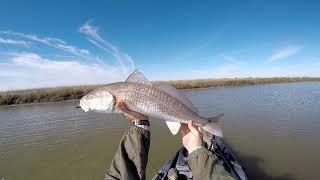 Super Shallow Backlake Fishing!(Sightcasting Reds)