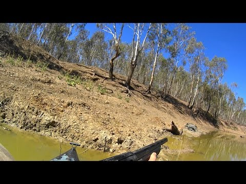 Hunting pigs in the wilds of NSW Australia. Viewer discretion advised.