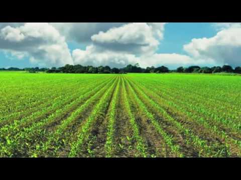 Land Ownership in Kenya - Susan B Odaya