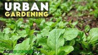Urban Gardening : Best Practices in Urban Gardening | Agribusiness Philippines