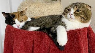 久々に家族大集結な猫たち