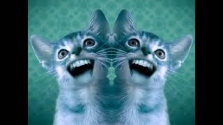 Singing Cats (Numa Cat) in G Major CoNfUsIoN