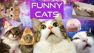 FUNNY AND CUTE CATS COMPILATION 😂😂😂 #27